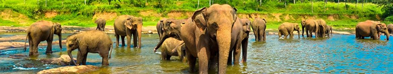 Фартук из стекла Воды слонам