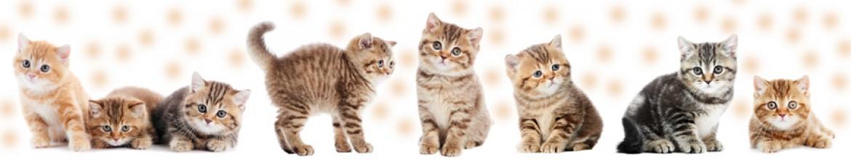 Стеклянные скинали Милые котики