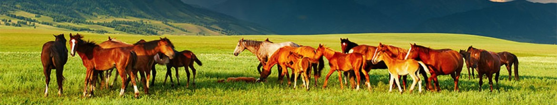 Скинали Табун лошадей