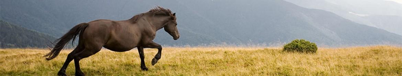 Скинали Галоп лошади