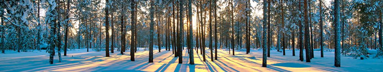 Стеклянные скинали Зимний лес