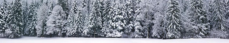 Скинали Зимний лес