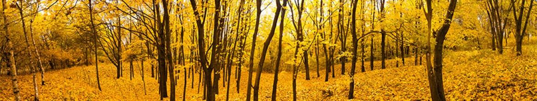 Скинали Осенний лес
