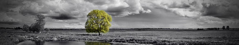 Скинали Одинокое дерево