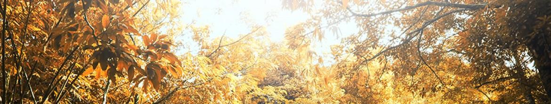 Фартук Солнце, освещающее макушки деревьев