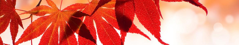 Фартук Красные, осенние листья