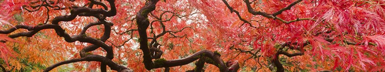 Фартук для кухни Ветвистые деревья
