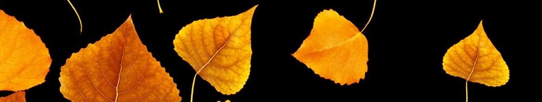 Стеклянные скинали Осенние листья