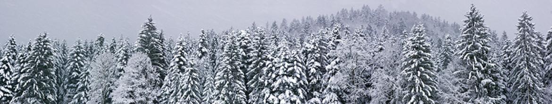Стеклянные панели Еловый лес в снегу