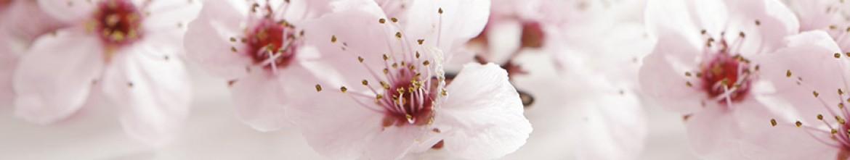 Скинали Розовые цветы