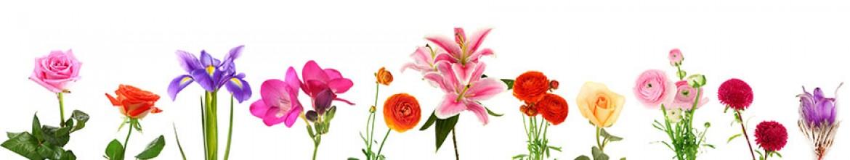 Скинали Розы и лилии