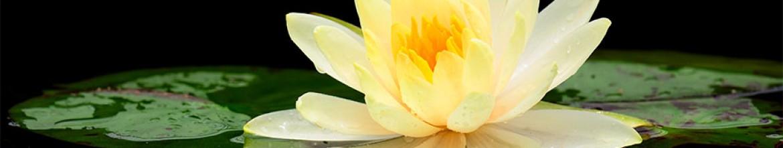 Скинали Цветок на болоте