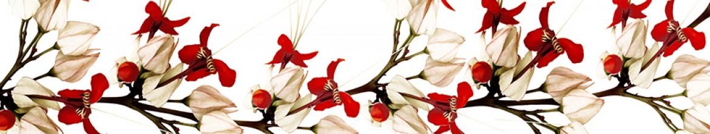 Скинали Белые и красные цветы