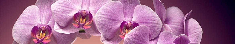 Скинали Фиолетовые цветы